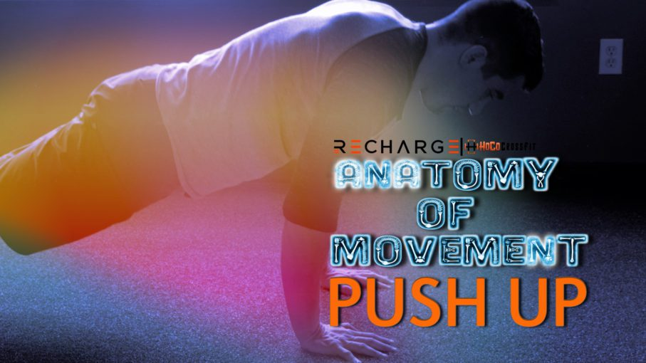 Push Up Anatomy of Movement